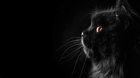 hd wallpaper black day black cats hd wallpapers beautiful pictures images hd
