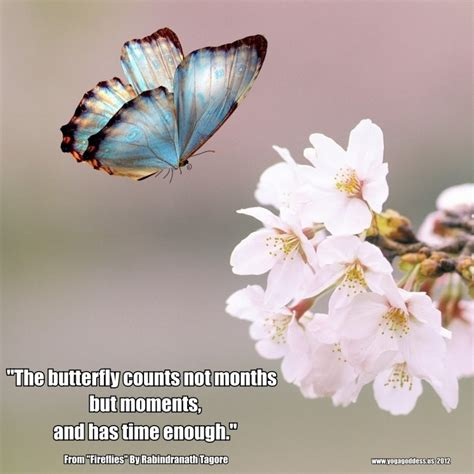 butterfly sayings butterfly quotes for quotesgram