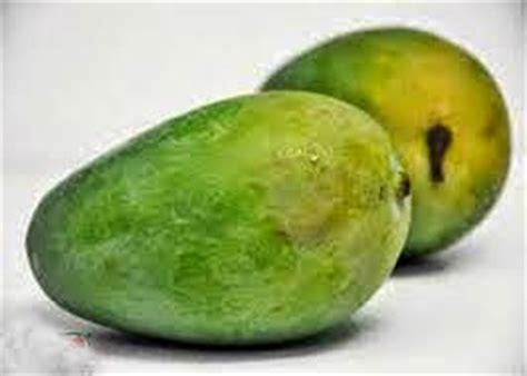 Jual Bibit Mangga Alpukat Semarang flora buah nusantara