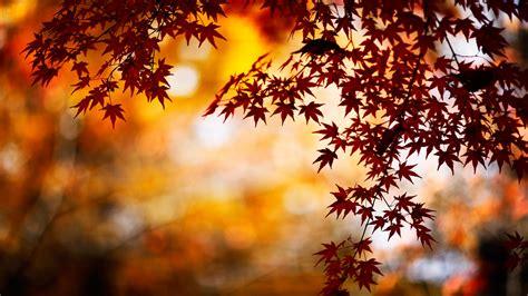 tumblr themes free autumn autumn season hd wallpapers