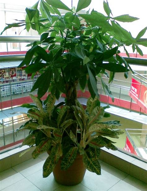 indoor plants singapore 1000 images about tropical brunch theme or end of summer pool on