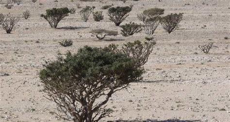 Goji Pflanzen Kaufen 330 by Rasen Unkrautvernichter Test Wie Wirkt Banvel M Im Rasen