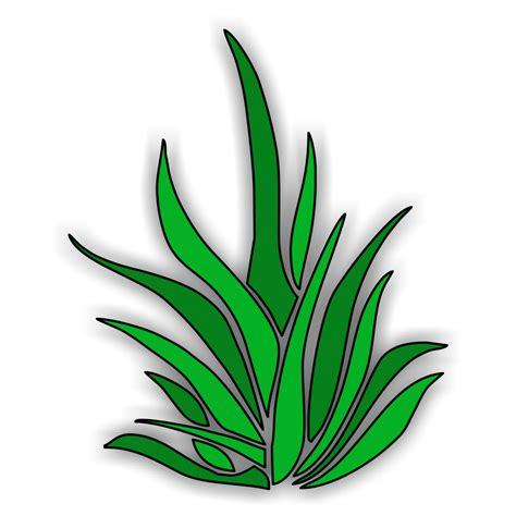 coloring book artist sea grass clipart best