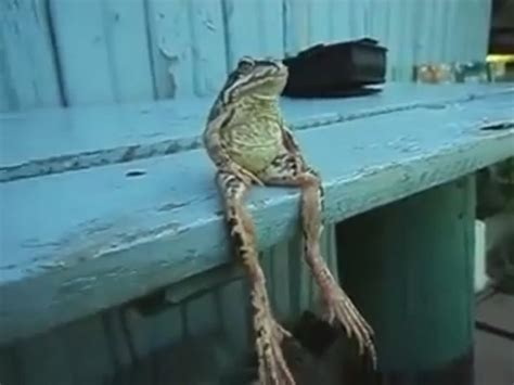 frog on bench frog sitting on a bench the hollywood gossip