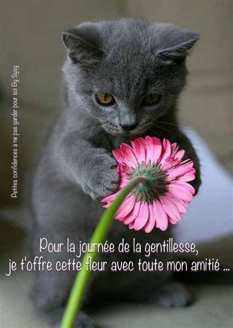 Cat Lover Meme - journ 233 e de la gentillesse images photos et