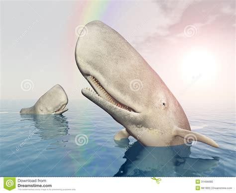 imagenes de ballenas blancas ballenas blancas foto de archivo imagen 31496680