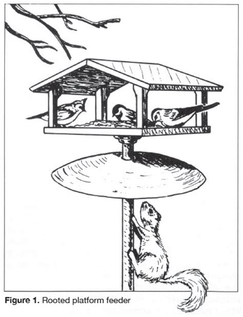 coloring page bird feeder winter bird feeder coloring pages
