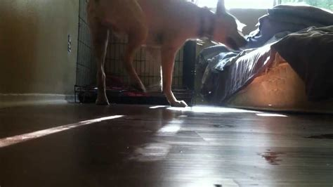 how to crate a with severe separation anxiety severe separation anxiety this exle funnydog tv