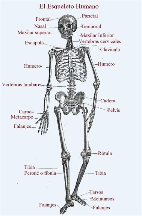 imagenes realistas del cuerpo humano huesos del cuerpo humano gallery