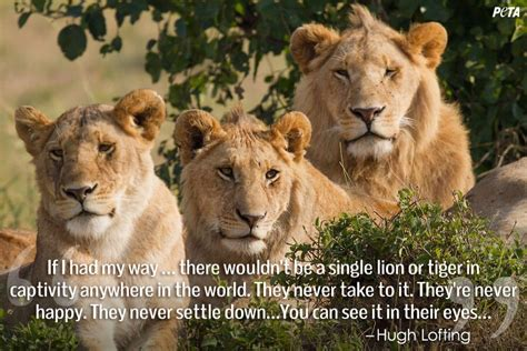 lion biography in english 9 quotes that will change what you think about zoos peta
