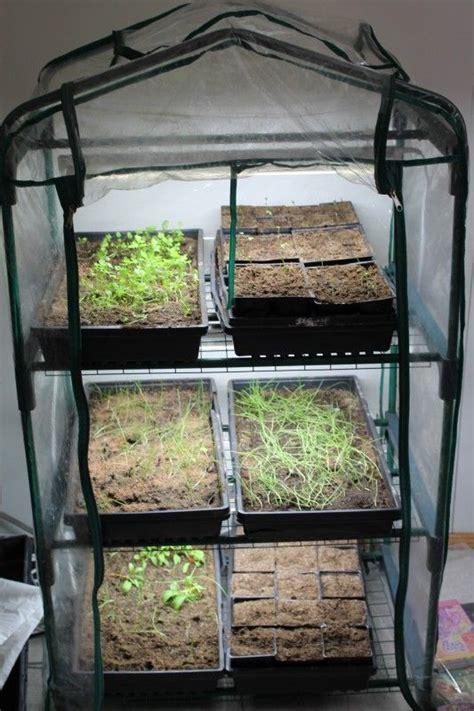 indoor greenhouse set  indoor greenhouse starting
