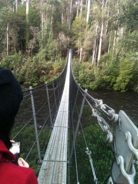 swing travel best 64 tasmania images on pinterest travel