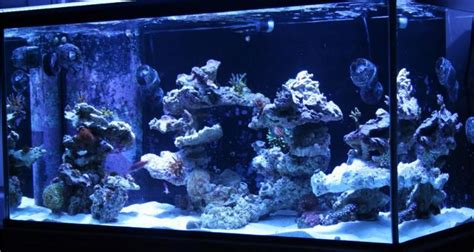 Saltwater Aquascaping Ideas by Aquascaping Pictures Ideas And Sketches Aquascaping