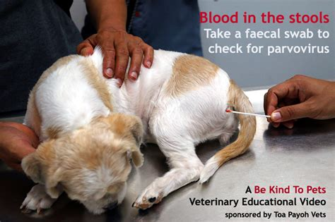 Blood In Cat Stools by Veterinary Medicine Surgery Singapore Toa Payoh Vets