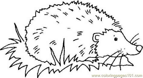 coloring page of a hedgehog hedgehog coloring page free hedgehog coloring pages