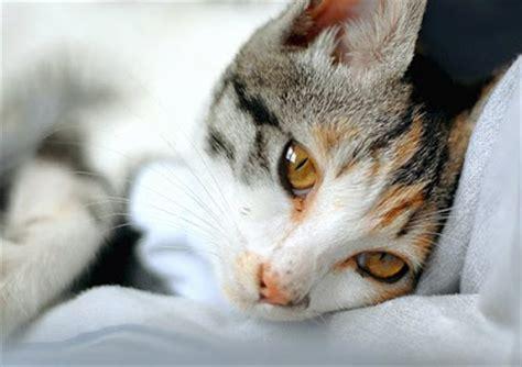 imagenes increibles de gatos 10 increibles fotos de gatos cabrobueno