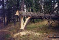 logging etool the cuts dangerous results of