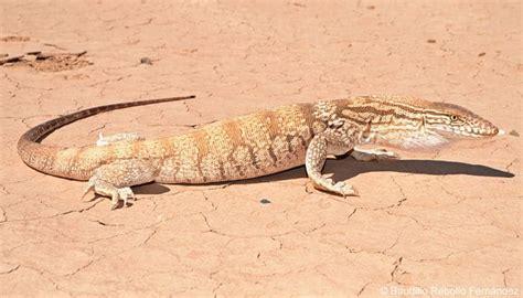 imagenes animales que viven en el desierto animales que viven en el desierto cu 225 les son 161 lo m 225 s