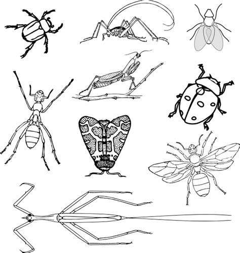 coloring book pages of insects nine bugs coloring book clip art at clker com vector