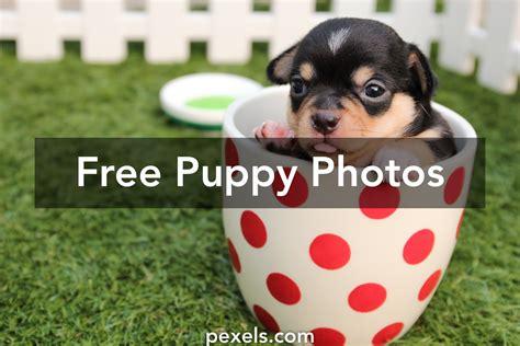 250 interesting puppy photos 183 pexels 183 free stock photos