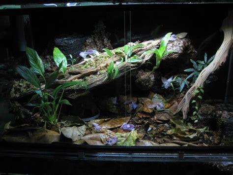 aquascape layout pdf 1000 images about akvaario ja paludaario on pinterest