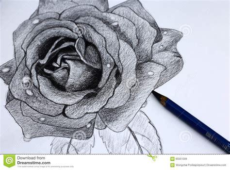 disegni a matita fiori disegno a matita i dei fiori fotografia stock immagine
