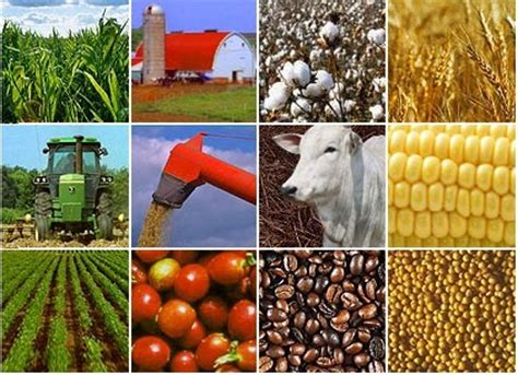 agribusiness: commodity trading and risk