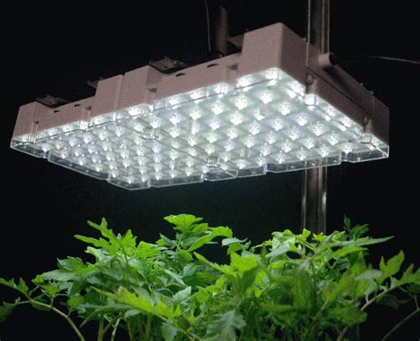 How Many Lights Do I Need In My Grow Tent Or Grow Room How Many Lights Do I Need For My Tree