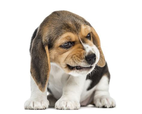 aggressive puppy biting and growling 9 kinds of puppy aggression