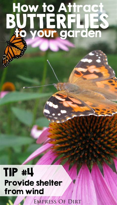 how to attract butterflies to your backyard how to attract butterflies to your garden gardens the o