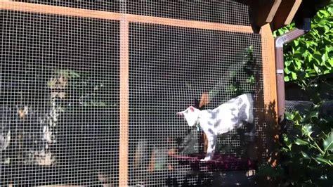 cat patio catio a cat patio