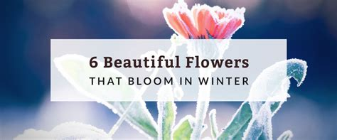 flowers that bloom in winter 6 beautiful flowers that bloom in winter hurdle land and