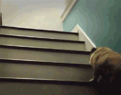 pug stairs 20 things that make you feel strong shape magazine