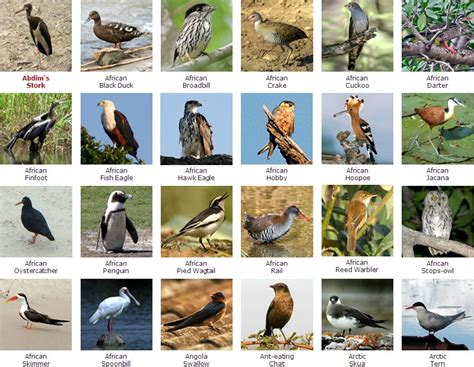 species name types of birds with names www pixshark images galleries with a bite
