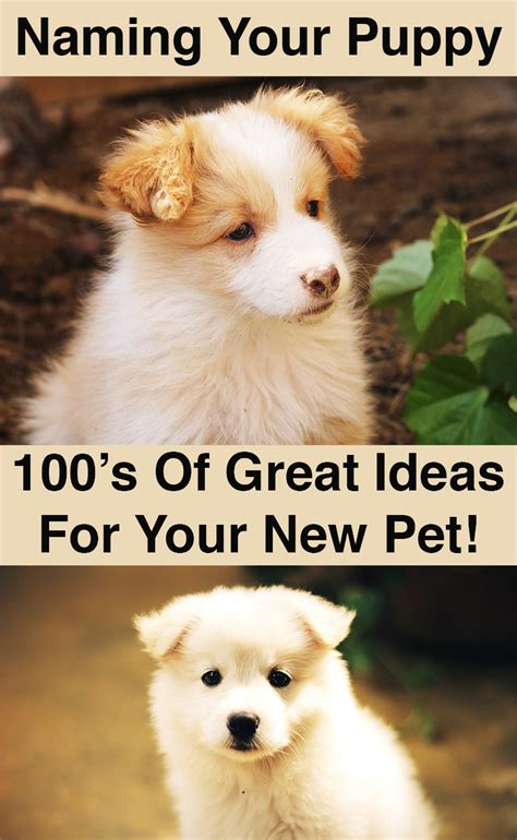 puppy names for names great ideas for naming your puppy the happy puppy site