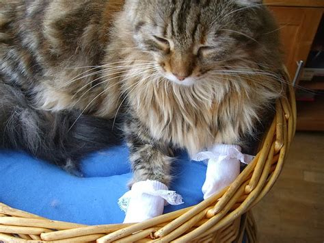 caterville cats wearing socks