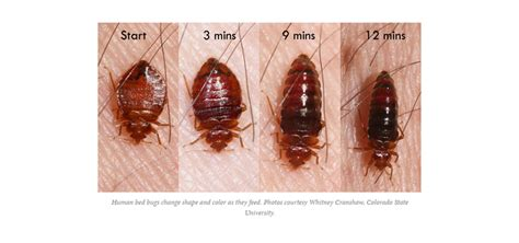 how to kill bed bugs fast how to get rid of bed bugs fast latest posts how to get