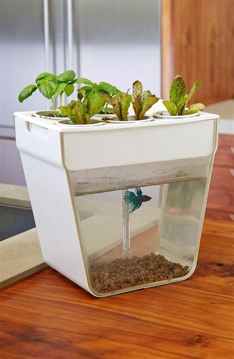 back to the roots aquafarm aquaponic indoor garden with