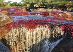 river of 5 colors awesome river of five colors cano cristales colombia