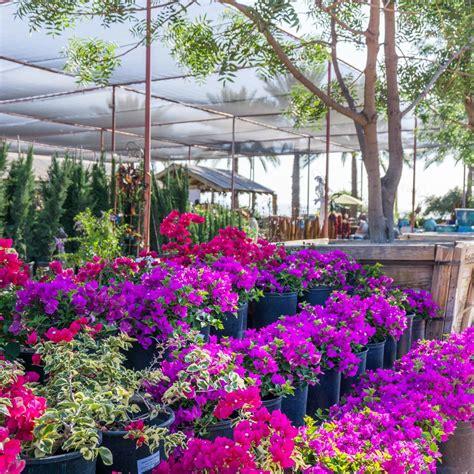 desert landscape plants landscape design tree plant nursery desert horizon
