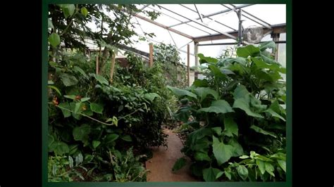 indoor forest gardens   energy climate battery