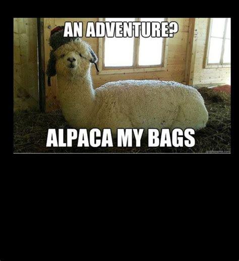alpaca puns