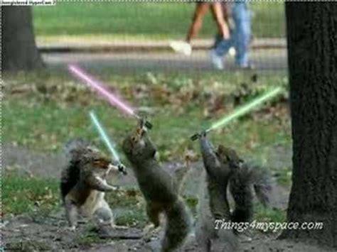 star wars squirrels youtube