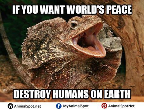 Hehehe Lizard Meme - lizard memes