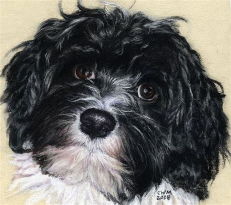 havanese personality 85 best images about havanese and cotton de tulear on