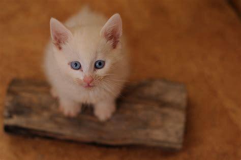 gattini alimentazione alimentazione per gattini quanto e cosa devono mangiare