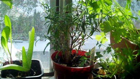 Window Ledge Herb Garden Window Sill Herb Garden Mywellness Network