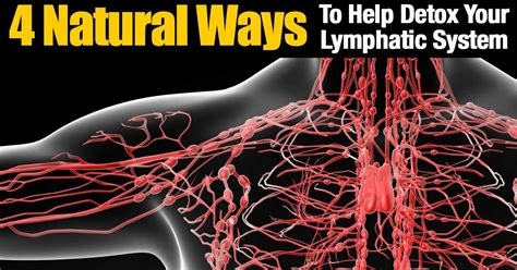 Detox Lymphatic System Naturally by 4 Ways To Help Detox Your Lymphatic System