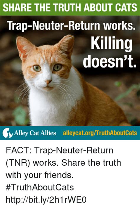 Cat Facts Meme - cat facts meme 28 images the facts about the cat facts