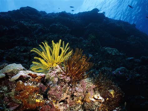 gambar wallpaper alam bawah laut wallpaper kehidupan bawah laut 38 foto